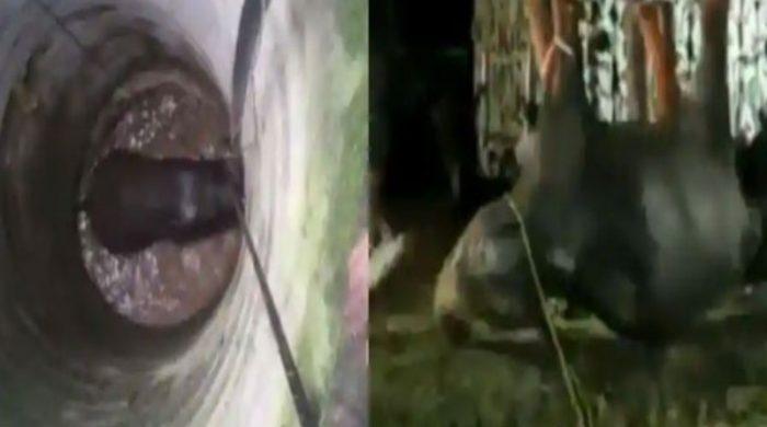 ৫০ ফুট গভীর কুয়া থেকে জীবিত হাতি উদ্ধার (ভিডিও)